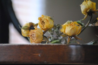 rose-666574_1920